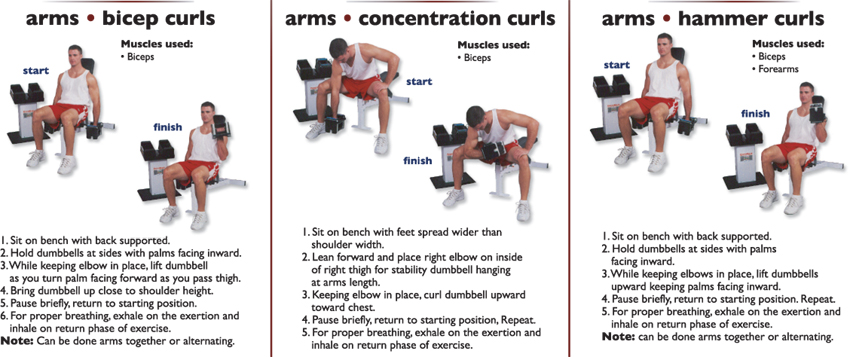 _arms_biceps_curl__arms_concentration_curls__arm_hamer_curls