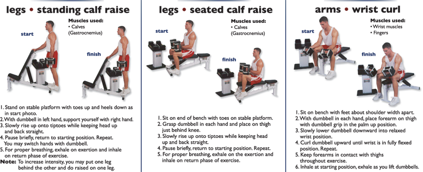 Legs_standing_calf_raise_seated_calf_rise_arms_wrist_curl